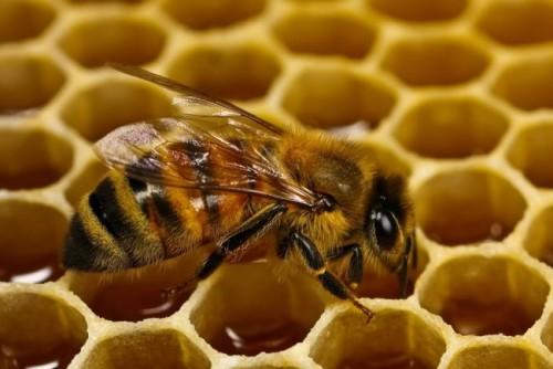 Información sobre el abeja 2