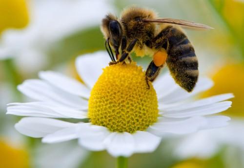 Información sobre el abeja 3