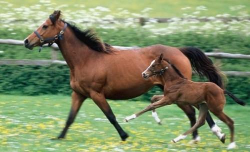 Información sobre el caballo1