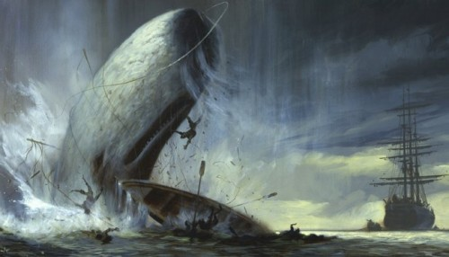 Información sobre el cachalote 3