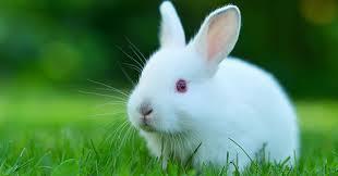 Información sobre el conejo 1