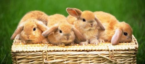 Información sobre el conejo 5