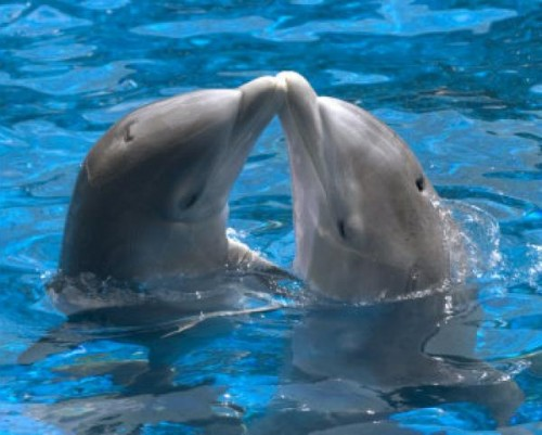Información sobre el delfin 4