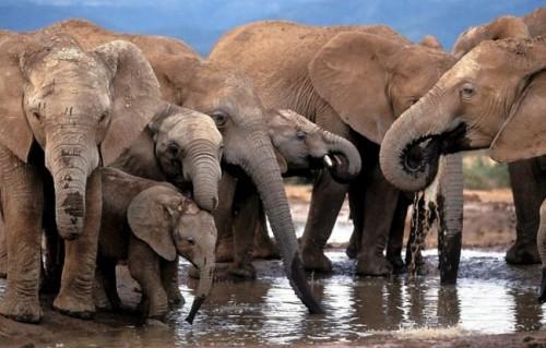 Información sobre el elefante 4