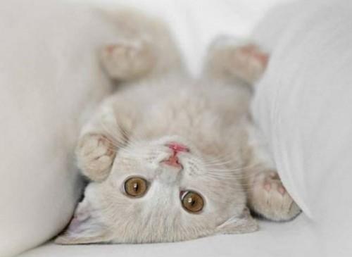 Información sobre el gato 2