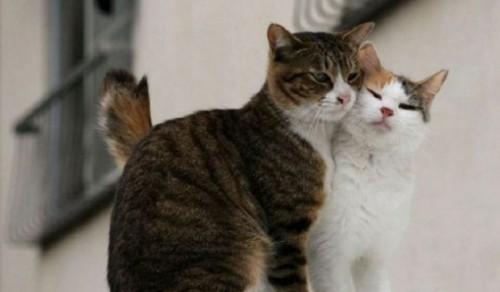 Información sobre el gato 4