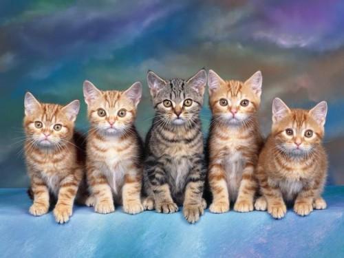 Información sobre el gato