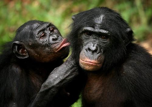 Información sobre el mono 3
