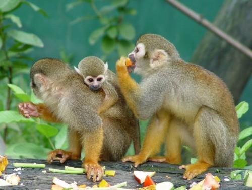 Información sobre el mono 4