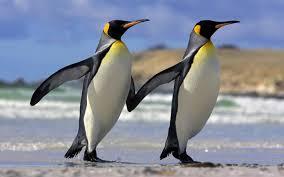 Información sobre el pinguino 1