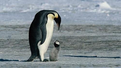 Información sobre el pinguino 2