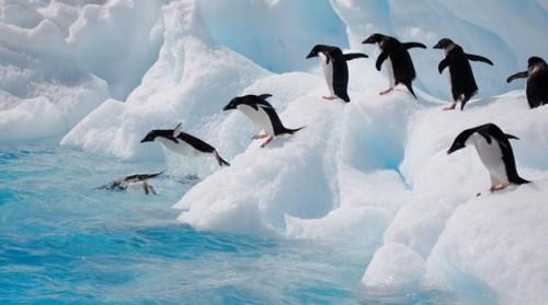 Información sobre el pinguino 3