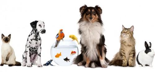 información sobre animales de compañia 2
