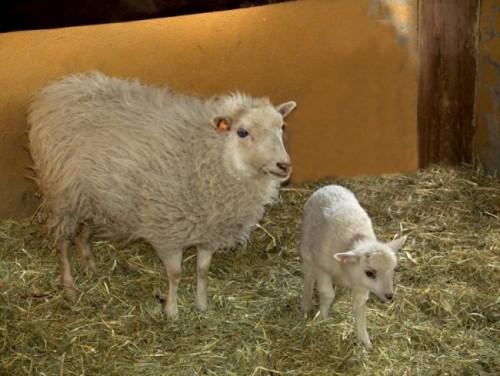 información sobre animales de granja 3