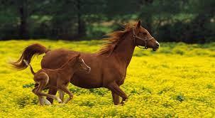 información sobre animales vertebrados 6