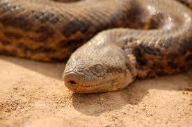 información sobre la anaconda 3