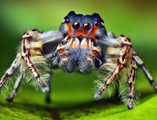información sobre la araña 2