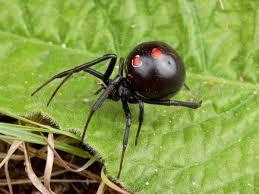 información sobre la araña 3
