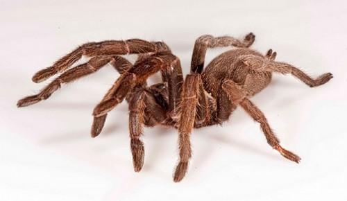 información sobre la araña 4