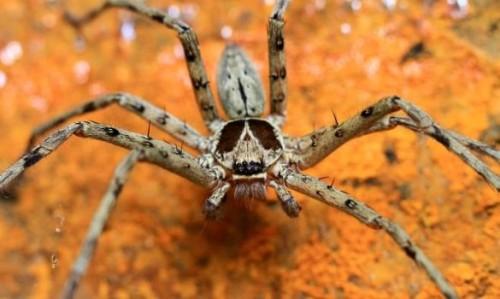 información sobre la araña 5