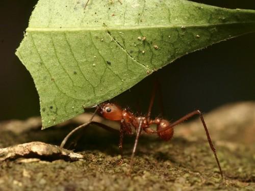 información sobre la hormiga 2