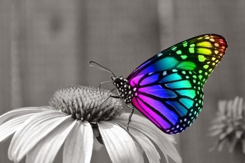 información sobre la mariposa 2