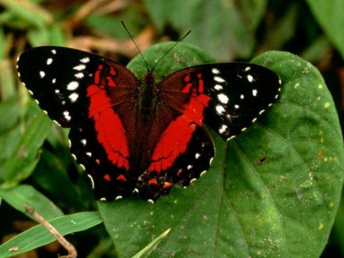 información sobre la mariposa 5