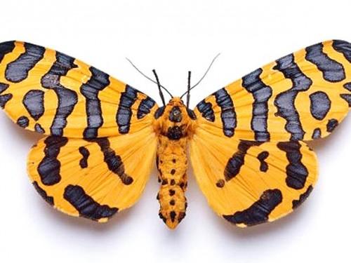 información sobre la mariposa 6