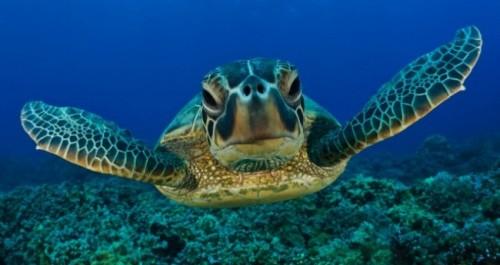 información sobre la tortuga marina 1