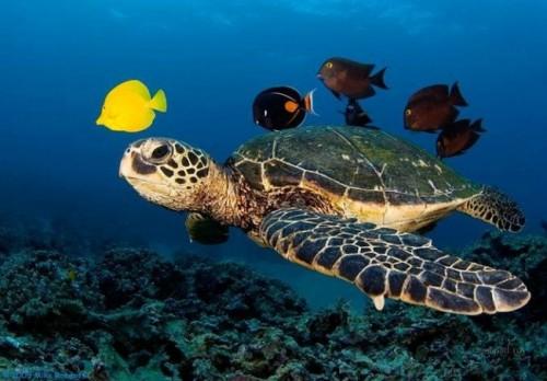 información sobre la tortuga marina 2