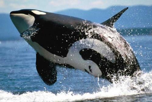 información sobre los animales acuaticos 1
