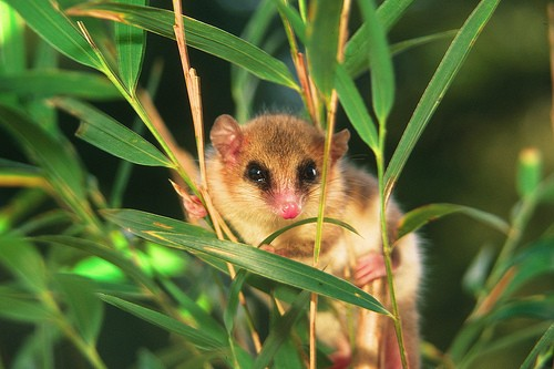 información sobre los animales mamíferos 5
