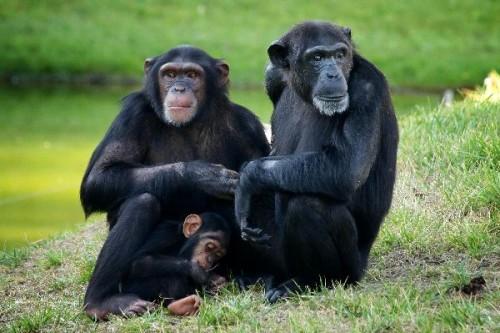 información sobre los animales vivíparos 2