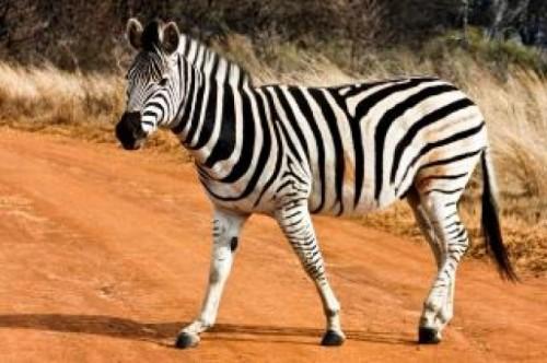 información sobre los animales vivíparos 3