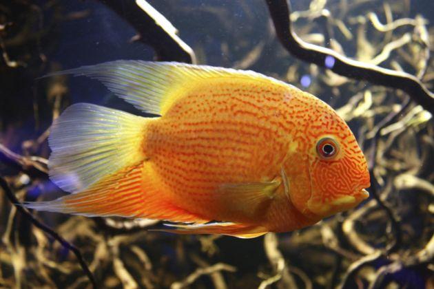 Informaci n sobre los peces informacion sobre animales for Peces que no necesitan oxigeno