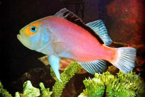 información sobre los peces 2