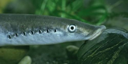 información sobre los peces 3