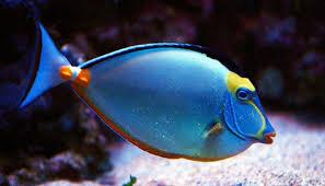 información sobre los peces 4
