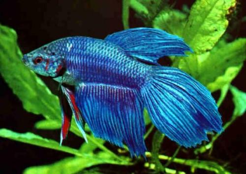 información sobre los peces 5