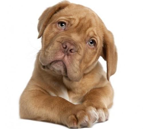 información sobre los perros 1