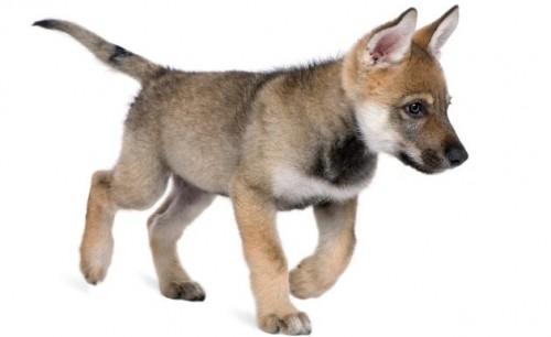 información sobre los perros 3