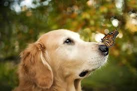 información sobre los perros 5