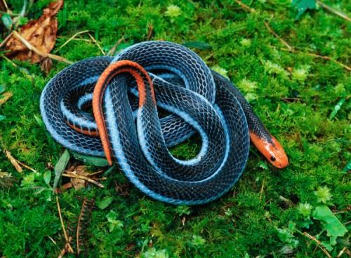 información sobre los reptiles 1
