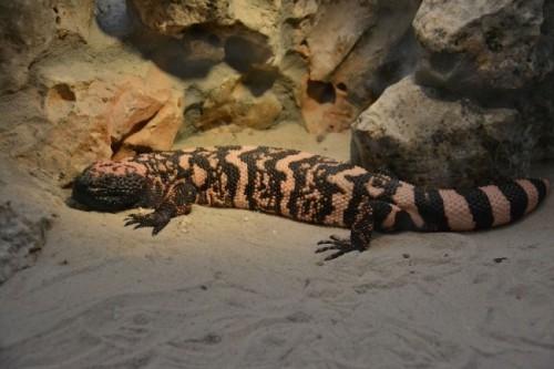 información sobre los reptiles 3