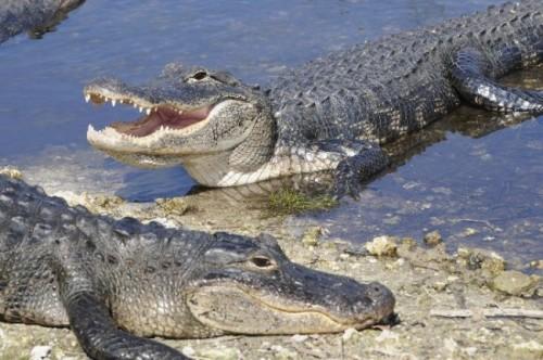 información sobre los reptiles 4