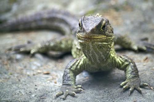información sobre los reptiles 5