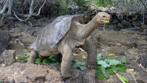 información sobre los reptiles 6