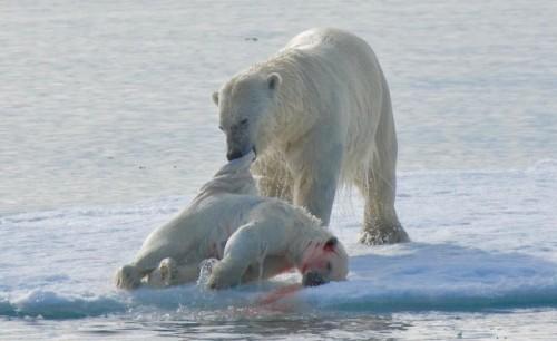 El cambio climático 1