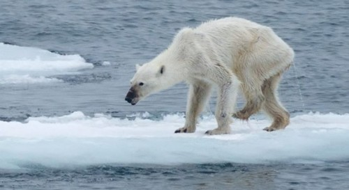 El cambio climático 2