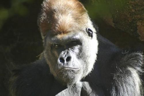animales en peligro critico de extinción 2